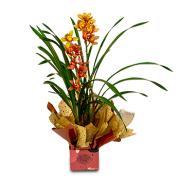 Orquídea Cymbidium Laranja