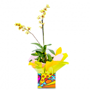 Orquidea Denphales Amarela