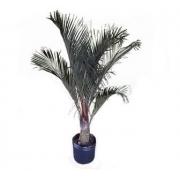 Palmeira Triangular 2 M