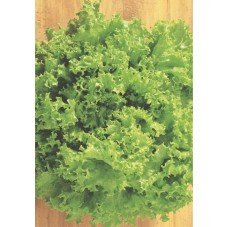 Alface Crespa Verde 700 Mg