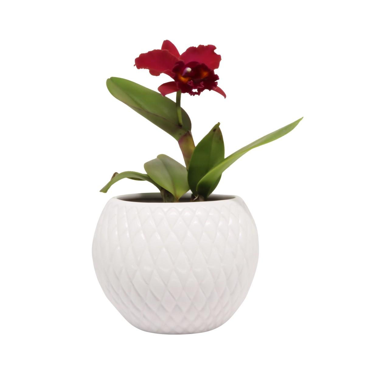 Cachepot Branco P Botanicals - 5718