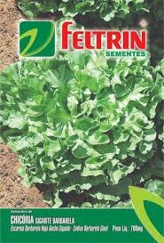Chicoria Gigante Barbarella 700 Mg - Econ