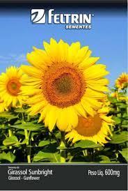 Girassol Sunbright 1,5G - Gol Flor