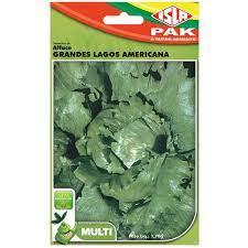 Original Alface Grandes Lagos Americana