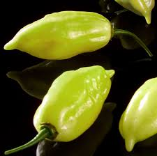 Semente Pimenta Lupita 100 Mg - Econ