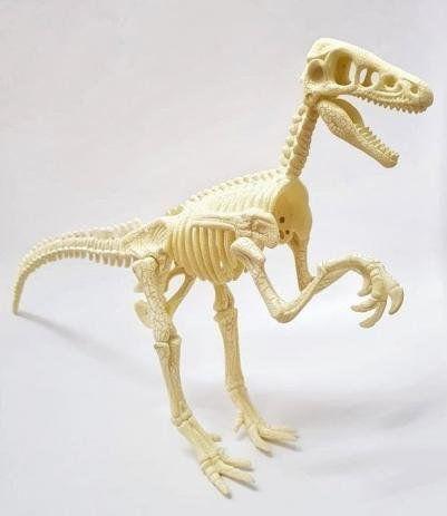 Mundo dos Dinossauros - Esqueleto gigante Velociraptor