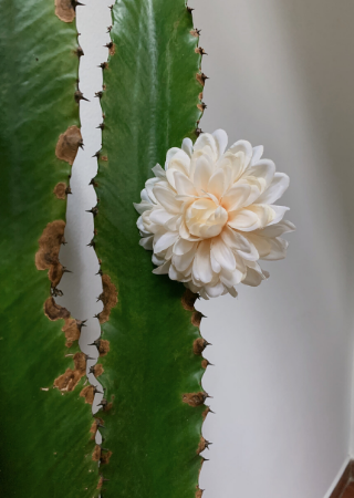 Presilha Flor Crisântemo Branca