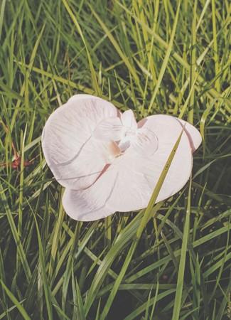 Presilha Orquídea Lilás