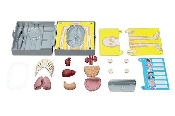 Anatomia Torso Humano Brinquedo    4M