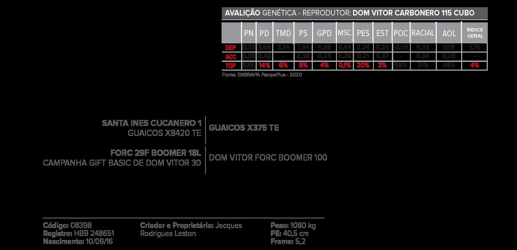 CUBO - Hereford Mocho  - CRV Brasil