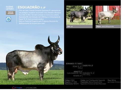 Esquadrão - Guzerá Leiteiro  - CRV Lagoa