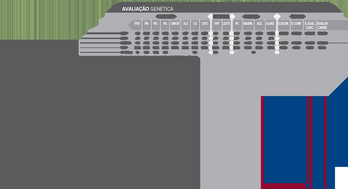 TRADEWIND - Aberdeen Angus  - CRV Brasil