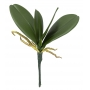 Folhagem Verde de Orquídea Permanente 25cm