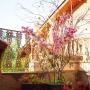 Haste de Cerejeira Rosa Permanente 135cm