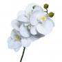 Haste de Orquídea Phalaenopsis Branca Permanente 70cm