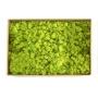 Musgo de Rena Verde Fresco 59x40x21cm 2700g
