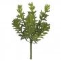 Suculenta Sedum Verde Permanente 17cm