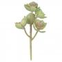 Suculenta Verde c/Rosa 18cm