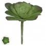 Suculenta Verde Permanente 10cm