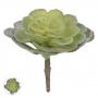 Suculenta Verde Permanente 14cm