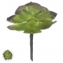 Suculenta Verde Permanente 15cm