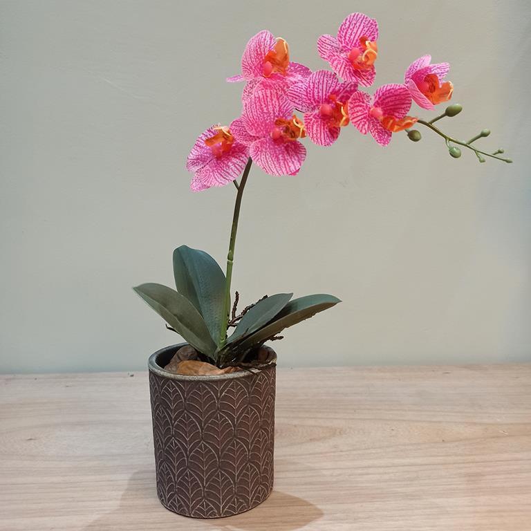 Arranjo de Orquídea Phalaenopsis Rosa Permanente