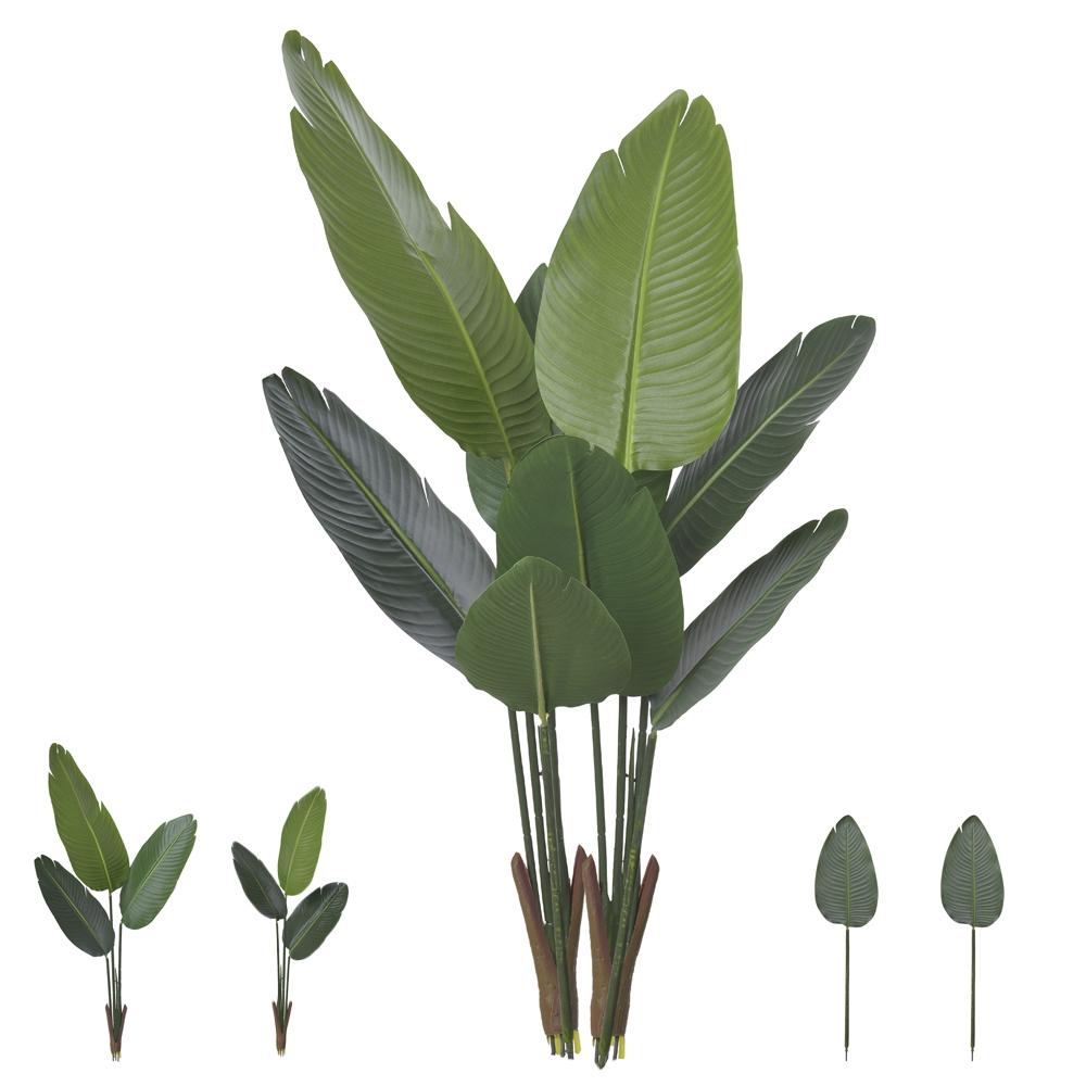 Bananeira de Jardim Verde Permanente 1,2