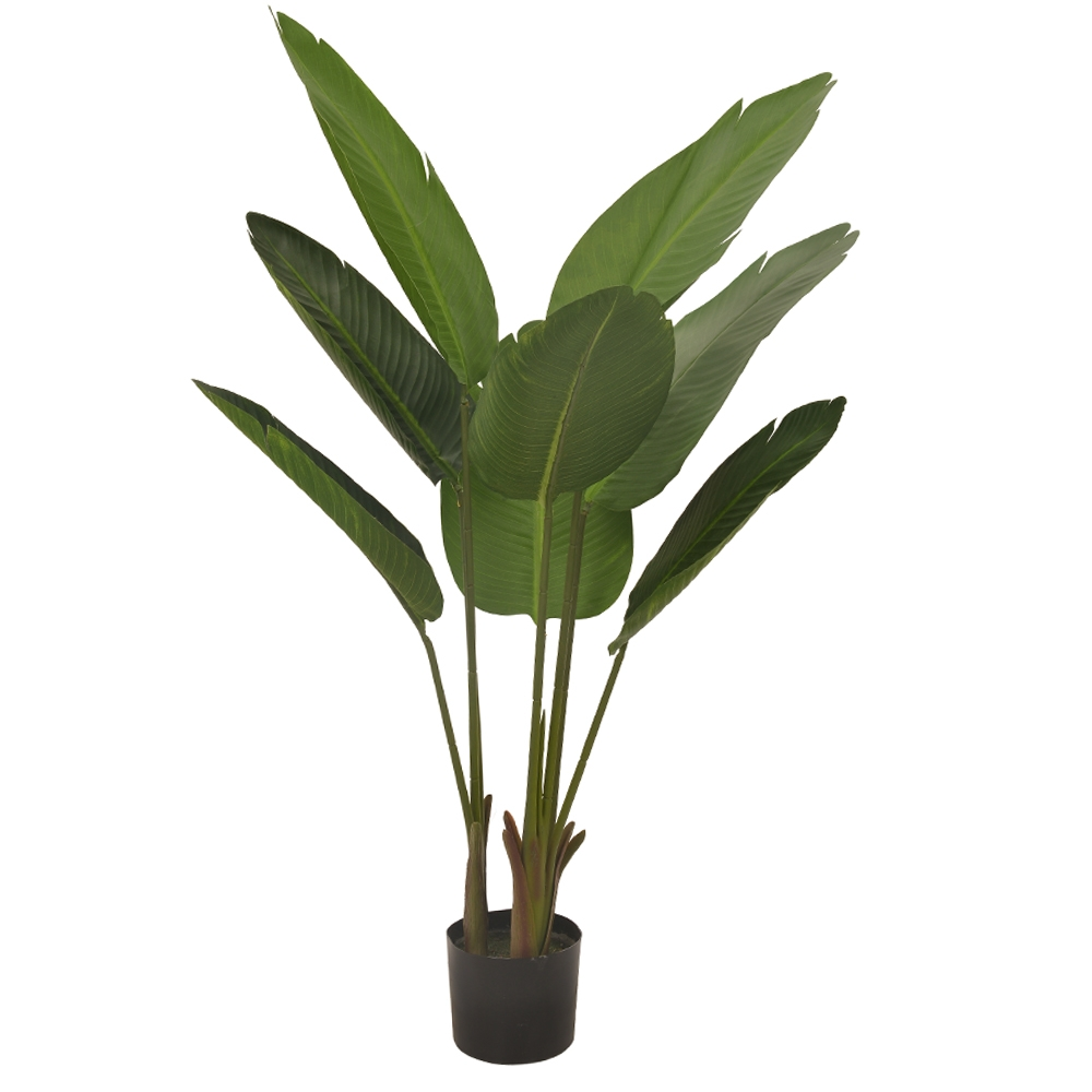 Bananeira de Jardim Verde Permanente 1,2m