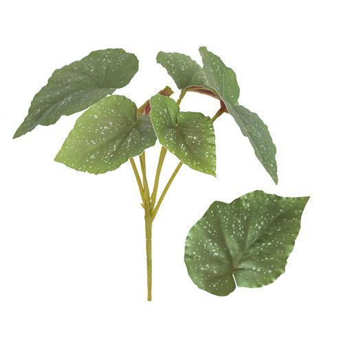 Folhagem de Begônia Verde Permanente 30cm