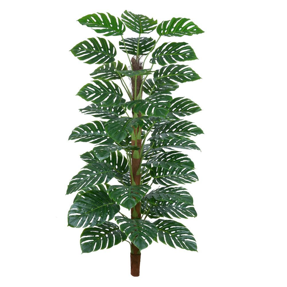 Costela de Adão Verde Permanente 1,7m