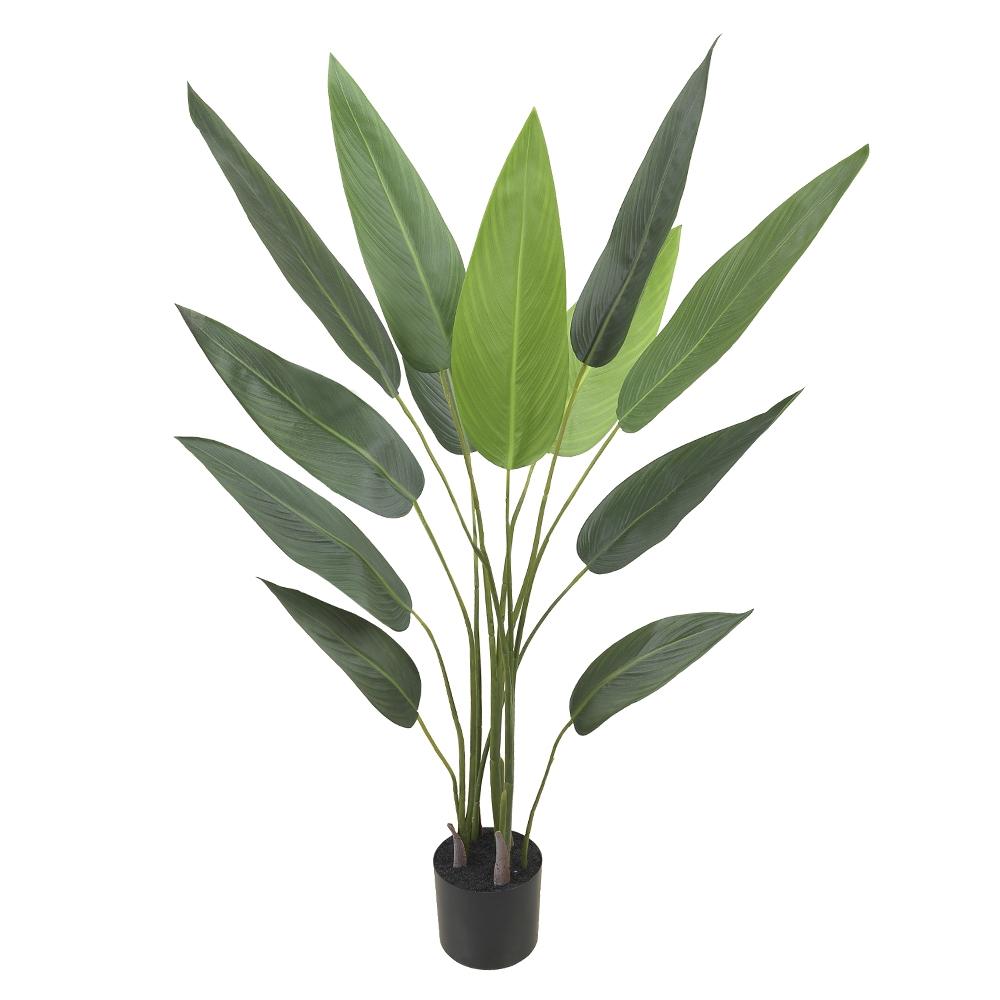 Estrelícia Verde Permanente c/Pote 1,3m