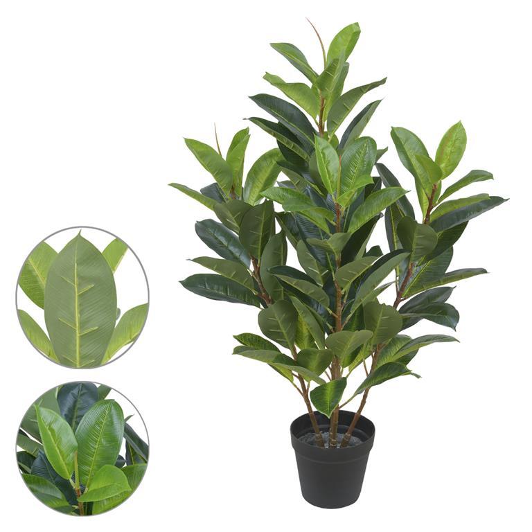 Ficus Elastica Verde Permanente 85cm