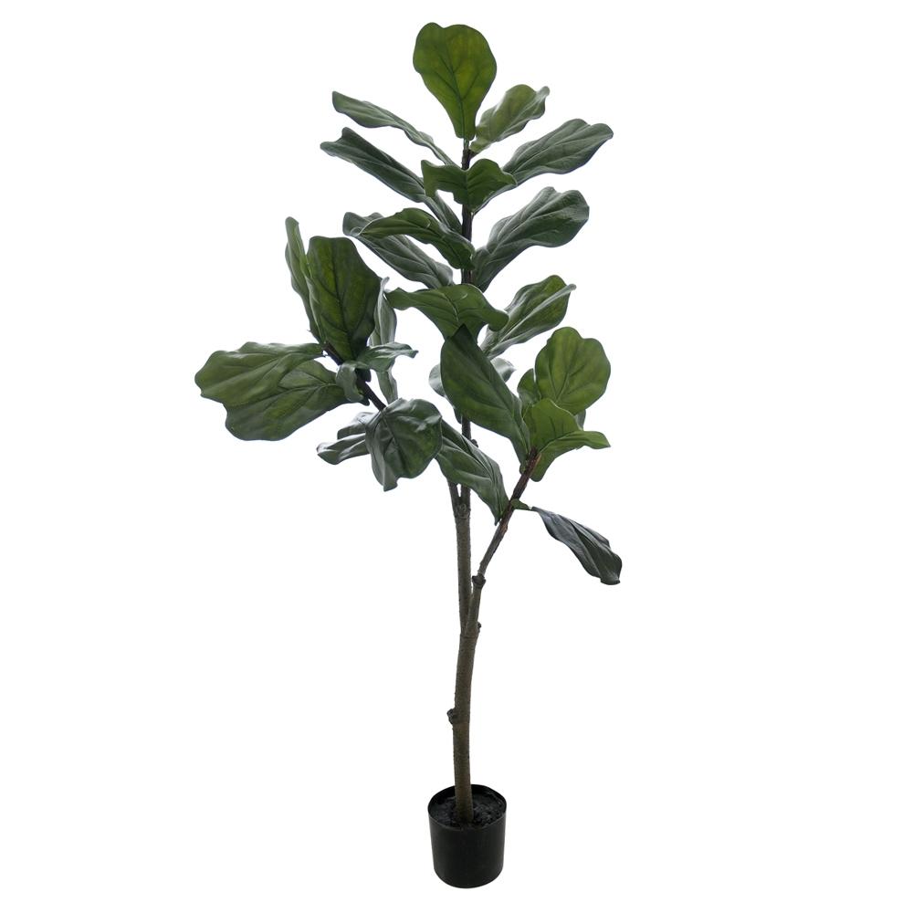 Ficus Lyrata Verde Permanente c/Pote 1,2M