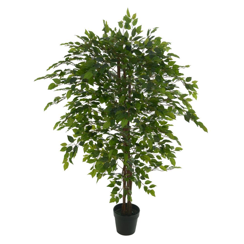 Fícus Verde Permanente c/Pote 1,5m