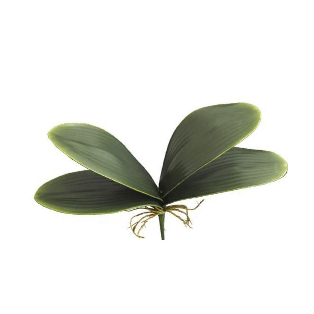 Folhagem de Orquídea c/Raiz 30cm