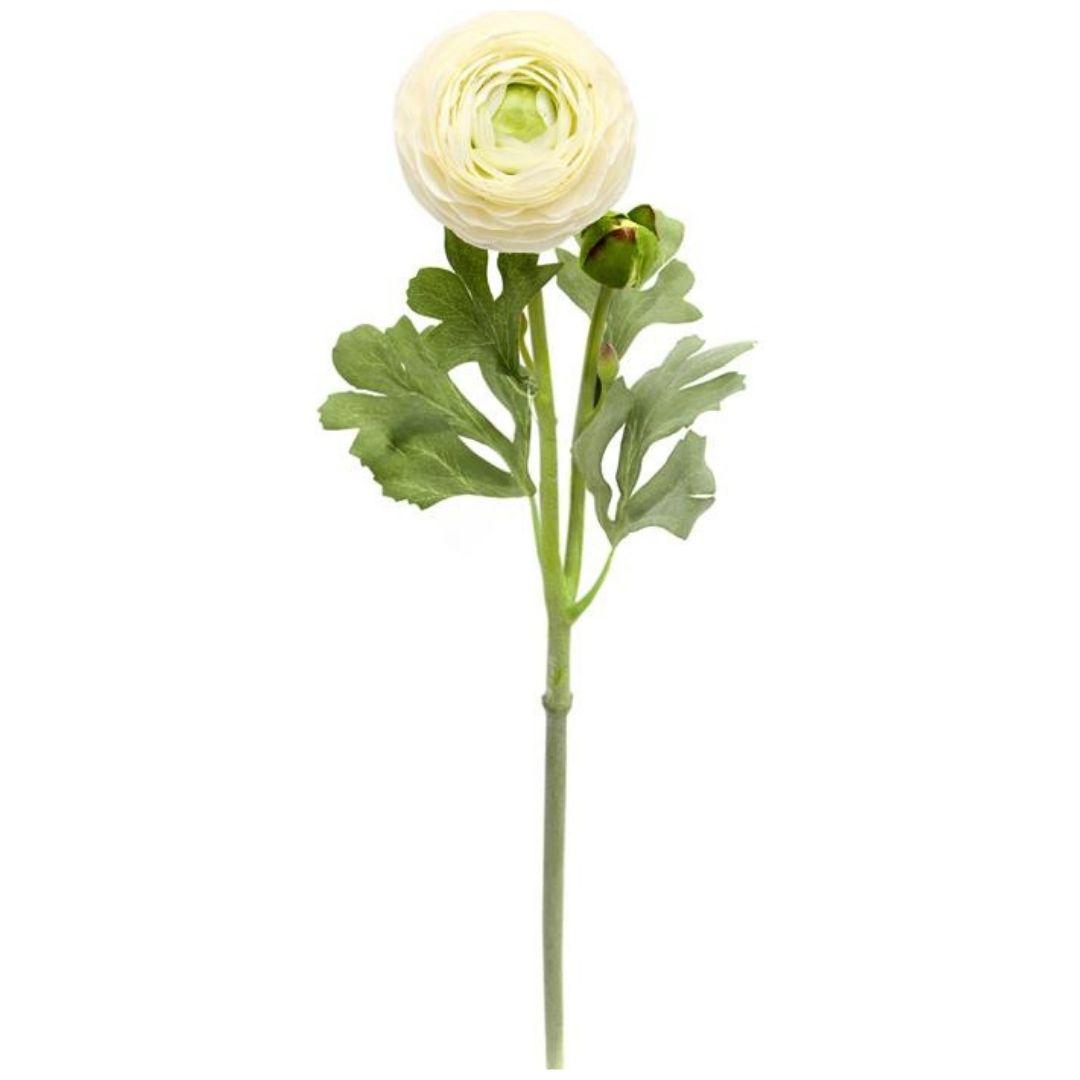 Haste de Ranunculus Creme Permanente 55cm