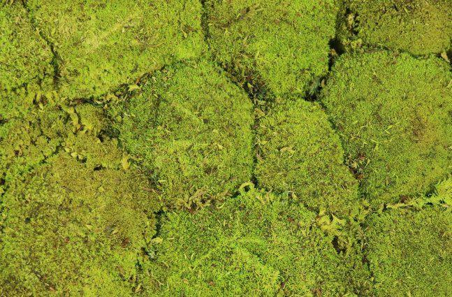 Musgo de rena (Bola) Verde Fresco 0,25M2