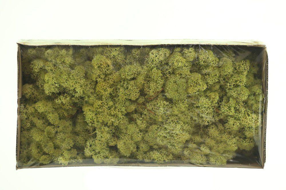Musgo De Rena Verde Antigo 38x19x9cm 425g