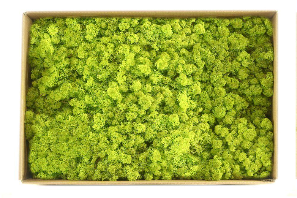 Musgo de Rena Verde Fresco 2700g