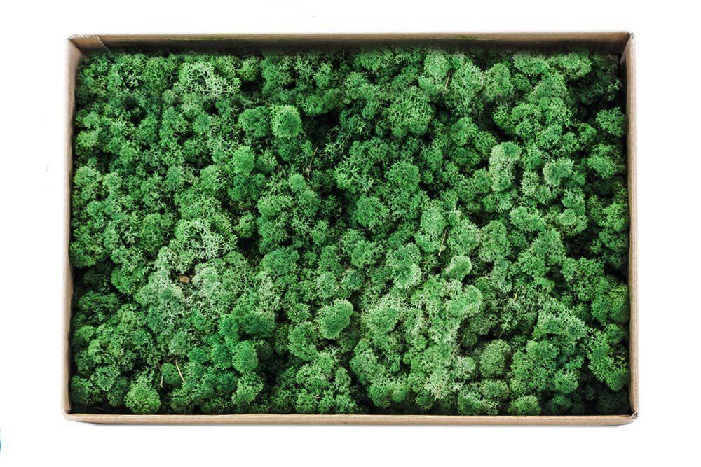 Musgo De Rena Verde Musgo 2700G