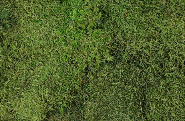 Musgo de Rena (Em Placas) Verde Musgo 3Kg