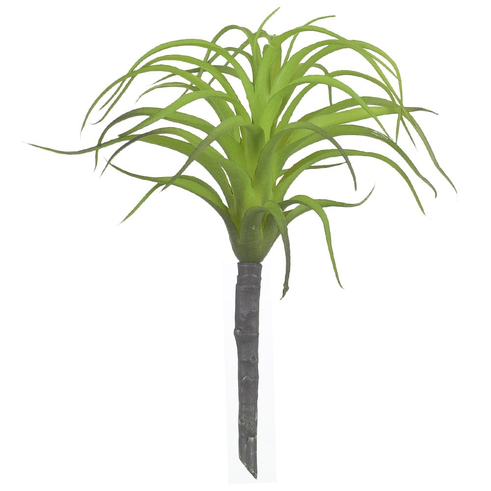 Suculenta Agave Verde 20cm