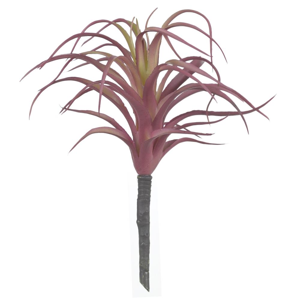Suculenta Agave Vermelho c/Verde Permanente 20cm