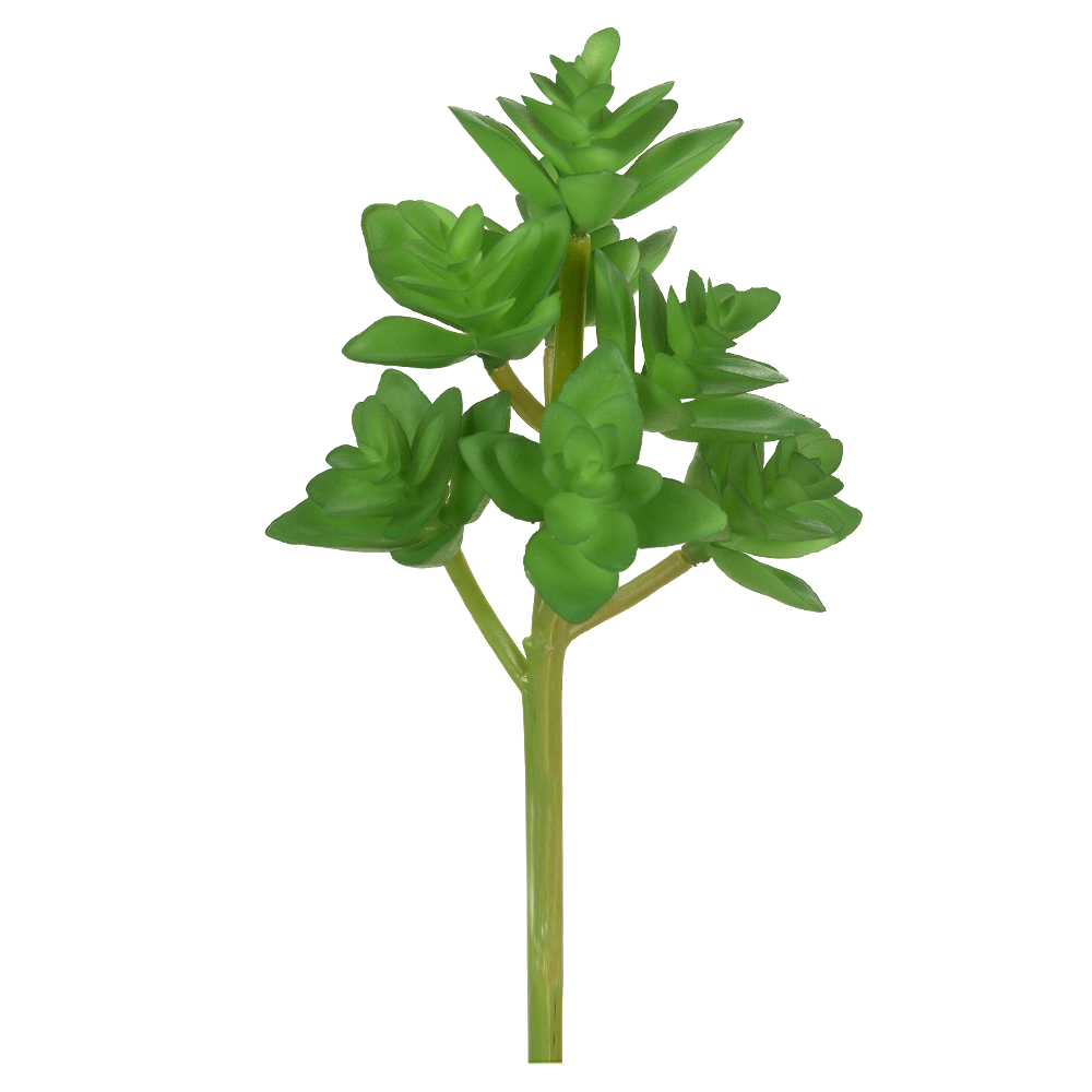 Suculenta Verde Permanente 19cm