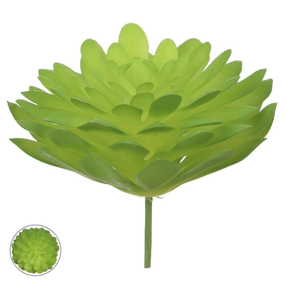 Suculenta Verde Permanente 9cm