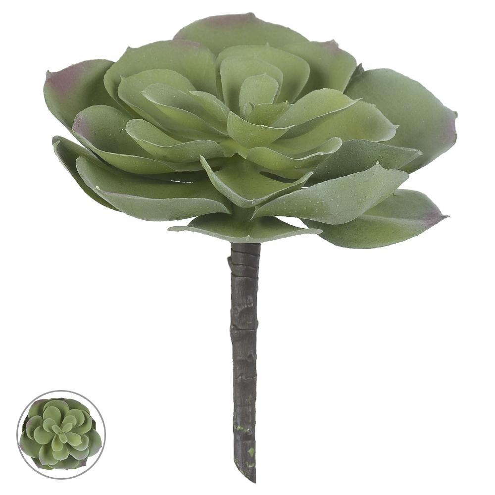 Suculenta Verde Permanente Verde 15cm