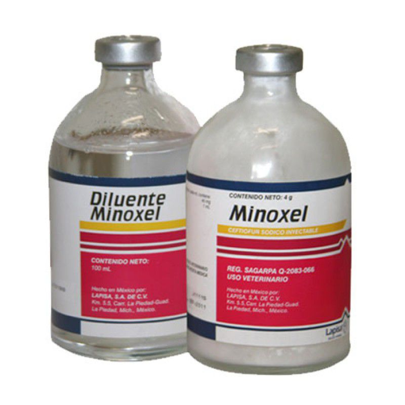 MINOXEL 8G C/ DILUENTE