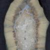 Filete de Ágata Preta