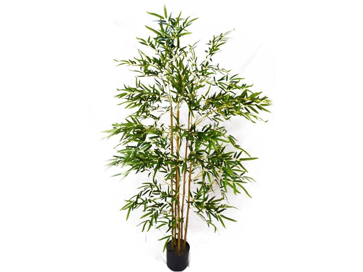Árvore Bambu Toque Real C/Pote X 1800