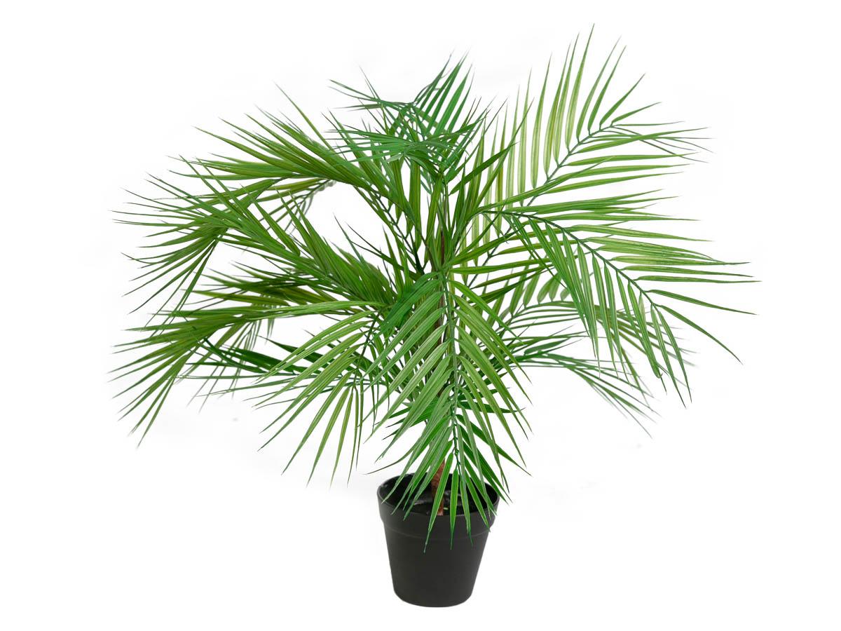 Arvore Palmeira Areca X15 Real Toque 0,70CM No Vaso